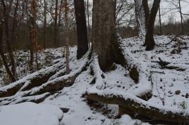 2014 snow 12