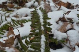 2014 snow 21