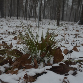 2014 snow 24
