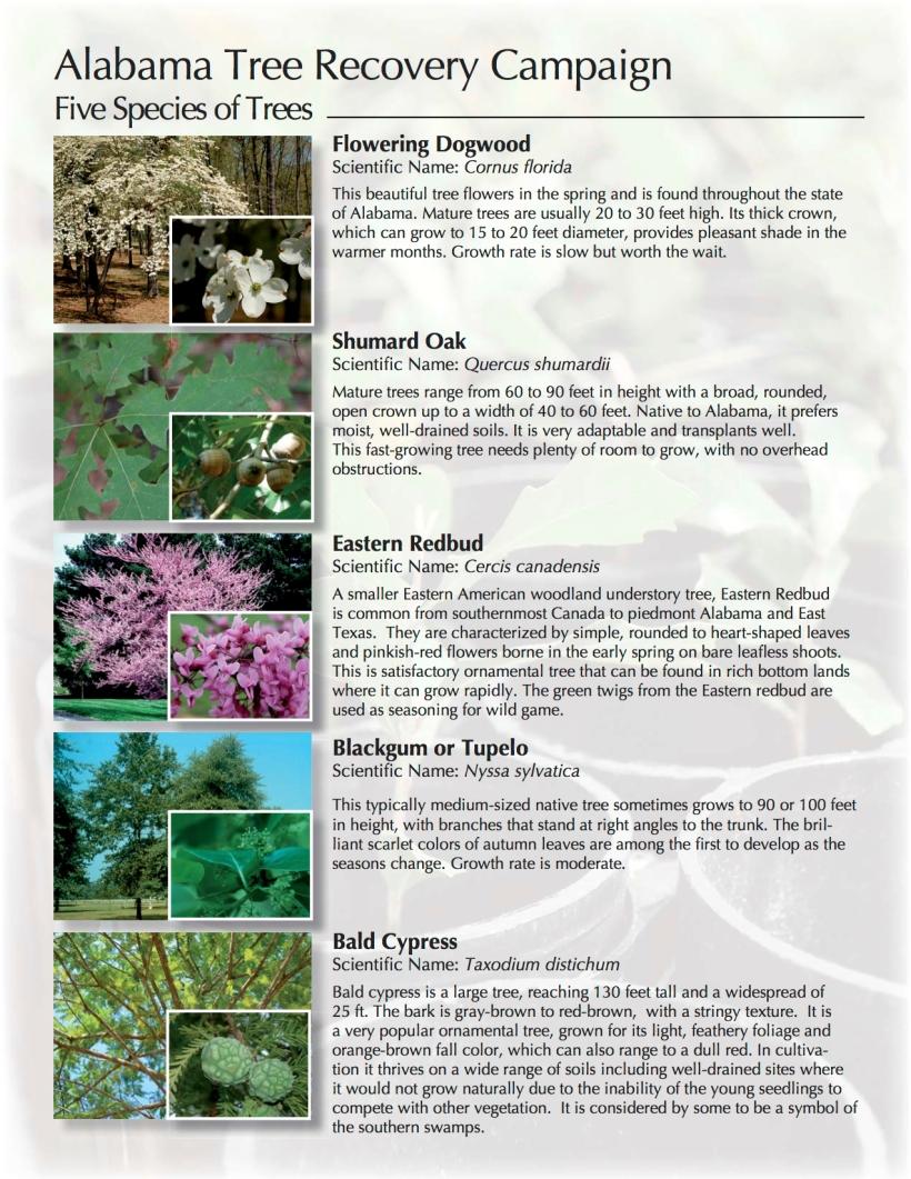 TreeRecoveryCampaign2014-2