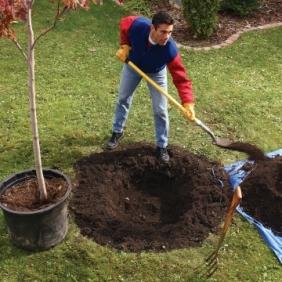 planting-tree1