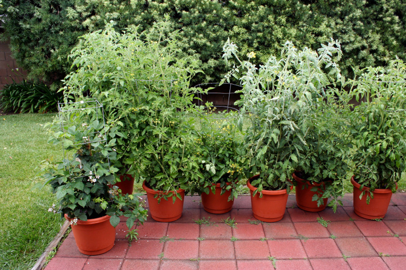 vegetables-red-containers